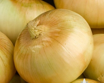 Yellow Sweet Spanish Onion Heirloom Seeds - Non-GMO, Open Pollinated, Untreated