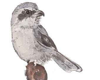 Shrike: watercolor print