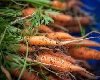 Scarlet Nantes Carrot - 300 seeds (Organic/non-GMO)