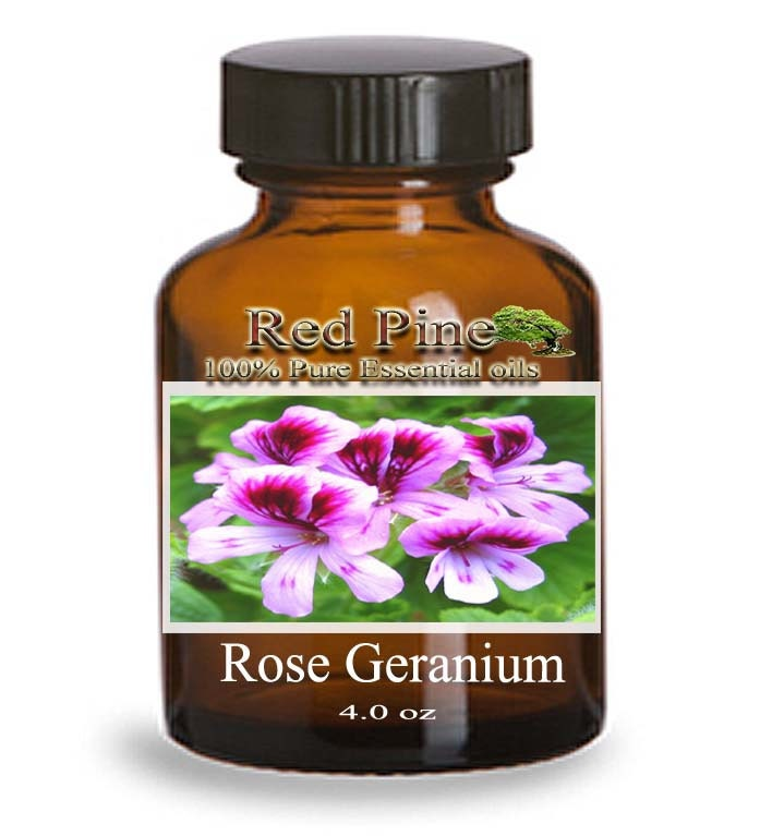 Rose Geranium Essential Oil Pelargonium Graveolens 100 Pure Therapeutic Grade From