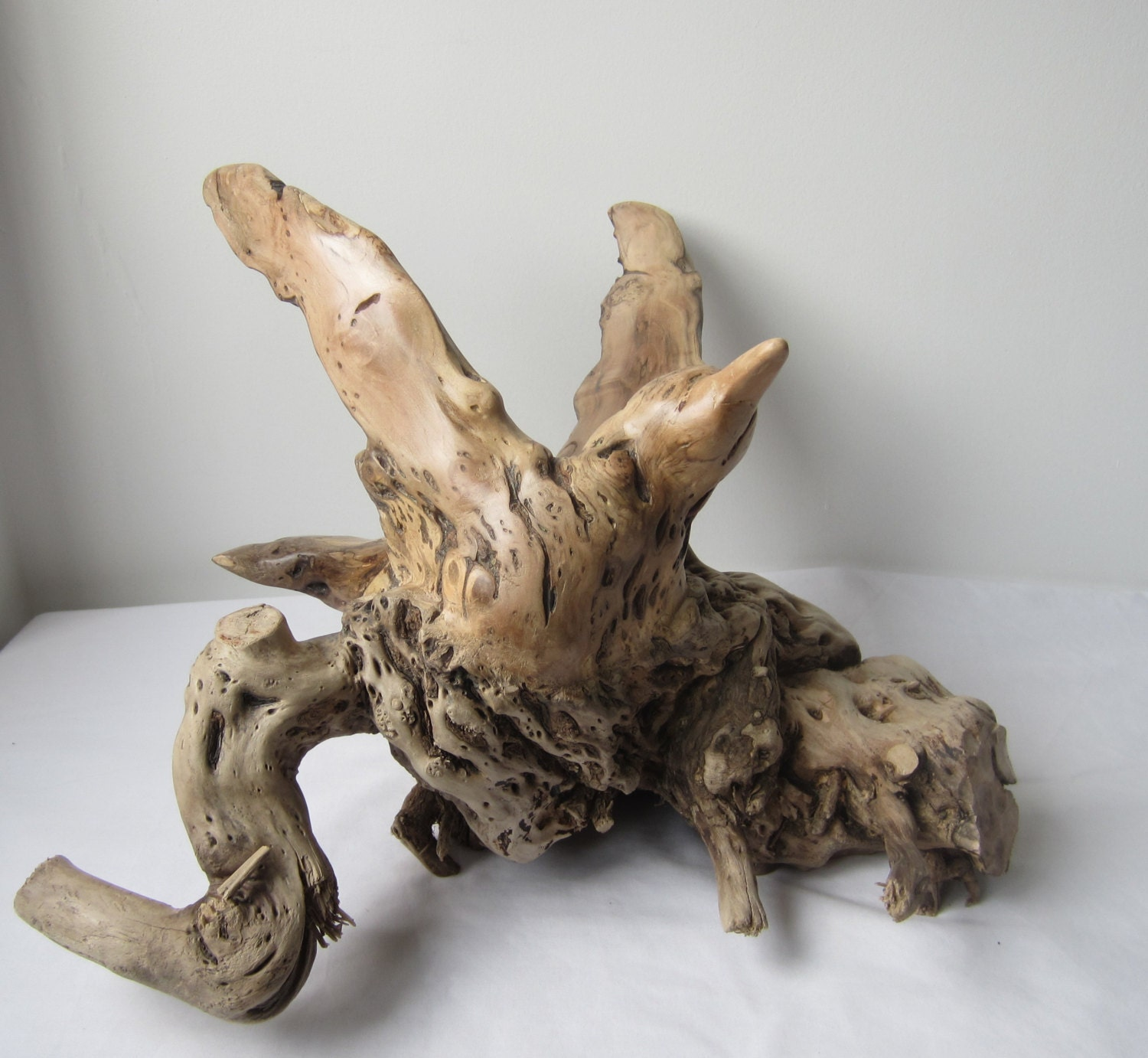 Hand carved driftwood sculpture of a tern by lymebaycarvings
