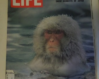 Life magazine Ecology Becomes Everybody's Issue- Snow Monkeys of Japan January 30, 1970