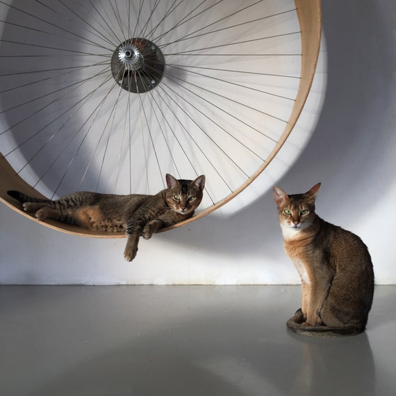 The cats wall's wheel // the wall's bike for cats - HolinDesign