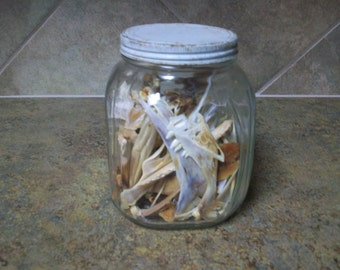 Vintage Dry Animal Jaw Bones Shabby Dry Creepy Dry Animal Jaw Bones Treasure
