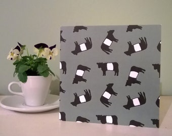 Scottish Belted Galloway cow blank greetings card