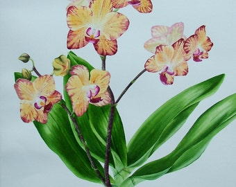Original watercolour painting, Orchid Splendour. Unframed.
