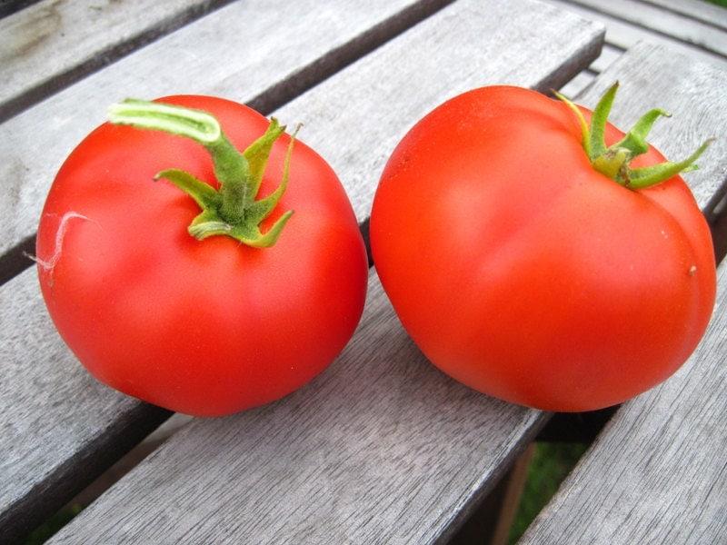 tomaten moskvich offen abbl hende tomaten samen. Black Bedroom Furniture Sets. Home Design Ideas