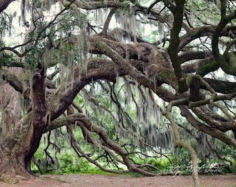 Fine Art Photograph, Savannah Georgia, Majestic Oaks, Spanish Moss, Green, Old, Oak Tree Photo, Romantic, Tree Photo, Mysterious, 8x12 Print