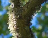 Lichen and Moss Natural Terrarium Fine Art Photography Print Cape Cod