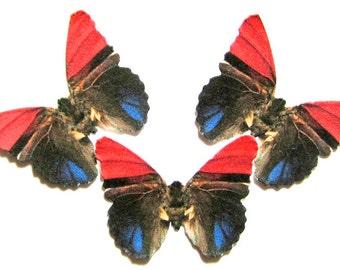 24 Salmon Pink, Blue & Black Butterflies for DIY weddings,  DIY butterfly baby shower, butterfly school kits, wall décor, stocking stuffers