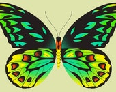 birdwing butterfly limited edition print