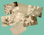 Five Fine Art Postcards, Vintage Inspired Sepia Photographs, Dahlia, Magnolia, Rose, Ranunculus Flower Photos