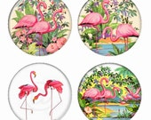 Tropical Flamingo Birds Magnets or Pinback Buttons or Flatback Medallions Set of 4