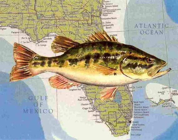 Florida state freshwater fish largemouth bass watercolor on for Florida freshwater fish pictures
