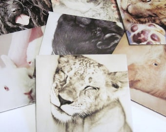 7 Handmade Animal Envelopes with inserts Recycled Upcycled Set no. 1