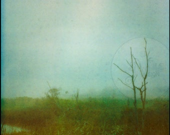 Twiggy - Lush Green Foggy Field with Bare Trees Surreal Polaroid Print - Nature Photography - Dreamy Landscape - Blue -Green Photo -