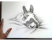 """Pencil Drawing of a Bunny Rabbit on White Bristol Board - Original Drawing 11"""" x 14"""" READY to SHIP"""