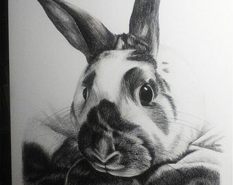 "Pencil Drawing of a Bunny Rabbit on White Board - Original Drawing 16"" x 20"" READY to SHIP"