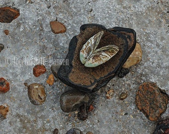 Beach Photo, Mussel Shell on Wood, Ice on a Beach, Detailed Textures in Nature Fine Art Archival Photographic Print, Zen Wall Art