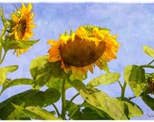 Morning Conversation (Sunflower - Botanical - Nature - Plants - Floral - Decor - Photography)