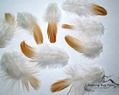 """Peach Plumage Natural Feathers Real Feathers Buff Feathers For Crafts Loose Feathers Eco Barnyard Polish Hen Feathers 25 @ 3 - 3.5"""" / 278"""