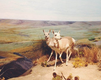 BUY 2 GET 1 FREE Deer Photography, Animal Photography, Boys Room, Landscape Photo, Wall Decor, Vintage Colours, White, Brown, Gold - Deer