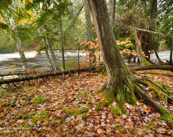 Autumn Along Tahquamenon River - Michigan Photography
