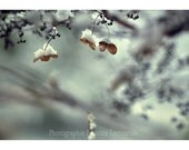 Flowers in December. Winter. Fine art photography print. 5 x7 (13 cm x 18 cm)