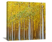 "Gold Forest Nature Photography ""Gilded Forest"" Fall Tree Photograph, Oregon Landscape, Autumn Tree Picture, Wall Decor, Canvas Gallery Wrap"