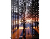 "Tree Nature Photography ""Radiant Sunset"" Tree Photo Sunset Print Tree Picture Tree Art Print Tree Photography Wall Decor Canvas Gallery Wrap"