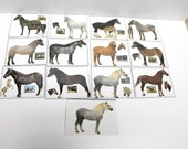 Scrapbooking  horse pictures,horse pictures,A 25,horse pictures for crafting,scrapbooking horse pictures,horses, horse ephemera
