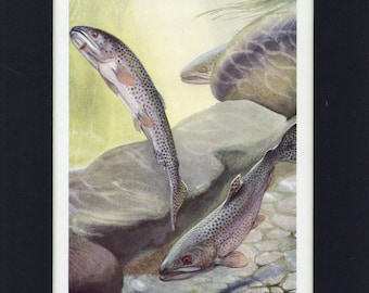 1949 Natural History Cut-Throat Trout Vintage Fish Print