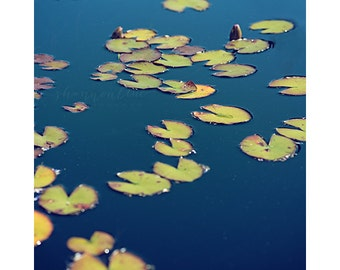 lilypad, lily pad, nature photography, botanical, blue, green, water, grow, plant, zen, peaceful, calm, serene / float / 8x10 fine art photo