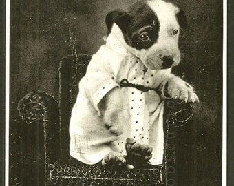 Dressed Pit Bull Puppy - Odd Adorable - Anthropomorphic - Vintage 1915 Postcard