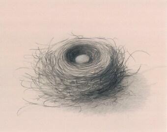 Charcoal on Newsprint Nest 1 Print