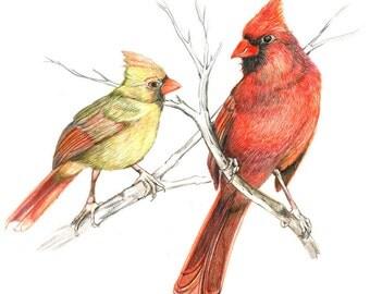 Pair of Cardinals, Original Colored Pencil drawing.