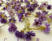Dried Cornflowers, Lavender, Cornflowers, Bachelor Buttons, Real Flowers, Edible, Flowers, Decorations, Soap Supplies, Dry Flowers. Edible