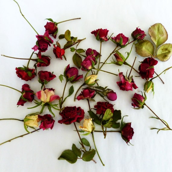 Dry rosebuds red ivory pink roses dried roses for Dried flowers craft supplies