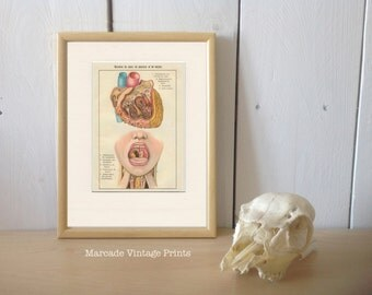 Heart Pharynx, Larynx, French Vintage Anatomy 2, Bilz Medical Oddities, 6 x 9, 8 x 10, 9 x 12, Antique Scientific Print, Library Decor