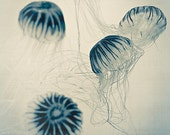 Blue Jellyfish Print, Indigo Nature Photography, Ocean Art Print -blue jellyfish decor, jellyfish photograph, ocean wall