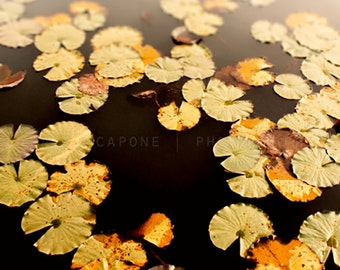 Autumnal Photography - Lily Pads, Fall Wall Art Print -  Nature print, Home Decor, Rustic, Natures Alchemy, orange, sage, ochre