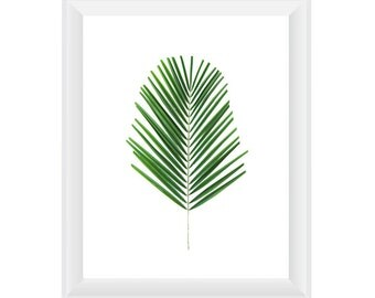 Palm N1 vertical. 8x10. Fine Art Photographic Natural History Print. Minimalist. Natural Home Decor. Indoor garden botanical.