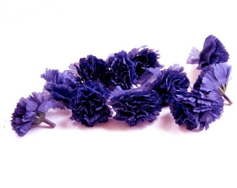25 Small Navy Blue Carnations