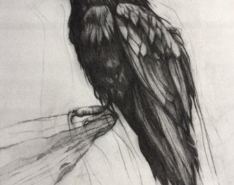 """Raven Print 8"""" x 10"""""""