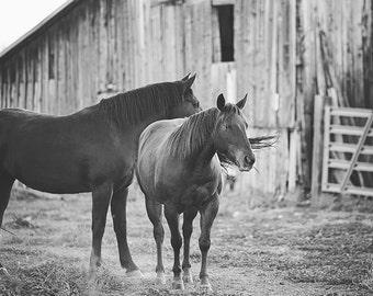 Western Horse near Barn, Black and White Horse Photography