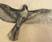 Taking Flight - Original mixed media painting - Hawk, Falcon, Raptor