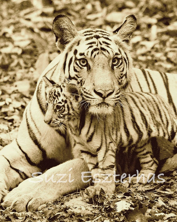 Safari Nursery Decor BABY TIGER and MOM Photo by ...