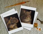 Squirrel Portrait Notecards - Squirrel Cards
