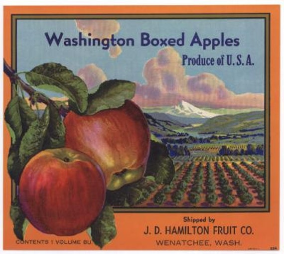 1940s Washington State Red Apples Orchard Hamilton Fruit