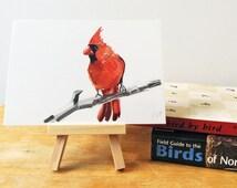 "Northern Cardinal Print, Bird Illustration, Digital Drawing, Animal Wildlife Art Postcard  4"" x 6"" NC1"